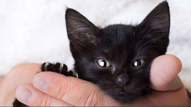 اسم های زیبا و بامزه برای گربه های سیاه-@ITPetnet